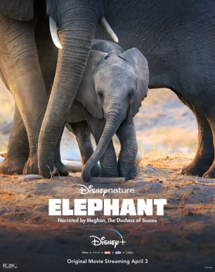 دانلود فیلم Elephant 2020